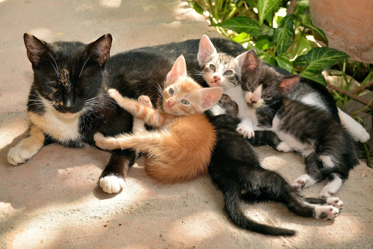 Chatte-et-chatons-1200x800.jpg