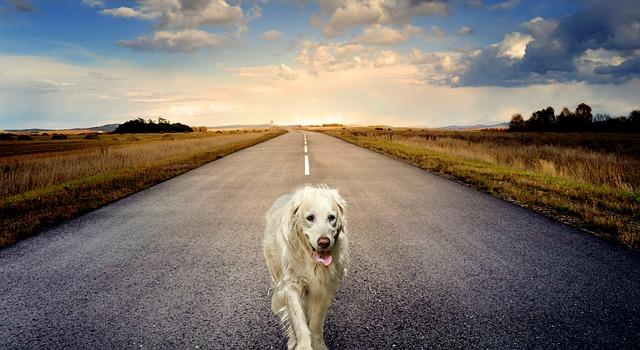 dog-3640784_640.jpg